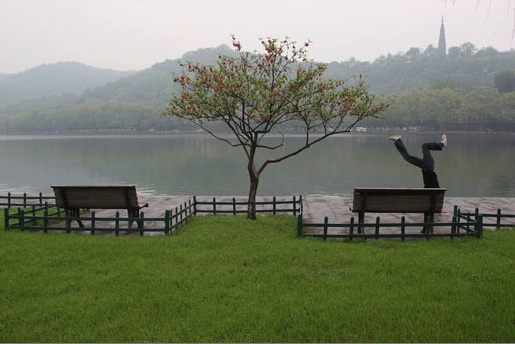 A tree by West Lake, Hangzhou